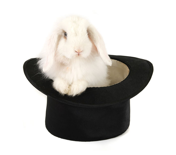 A rabbit! In a hat!